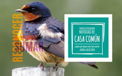 Casa Común. Junio/Julio 2019